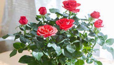 راحتی و زیبایی خانه شما با گلدان شیائومی Xiaomi Flower Stand
